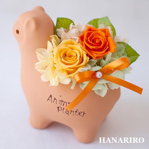 アレンジ「アルパカさんアレンジ」
