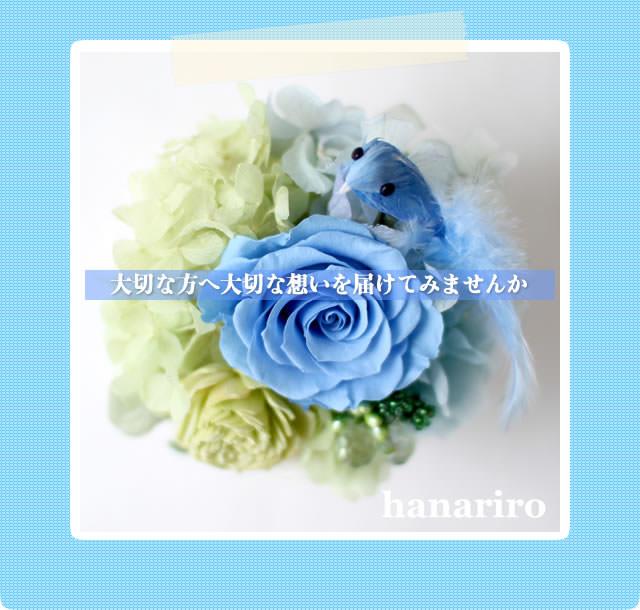 アレンジ「幸せの青い鳥(ブルーミニ)」/プリザーブドフラワーギフト